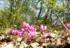Šijanska šuma – najveća park šuma u Istri