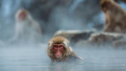 Budi i ti majmun