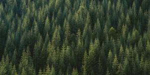 Vječno pjevaju šume