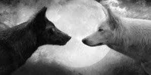 Priča o dva vuka