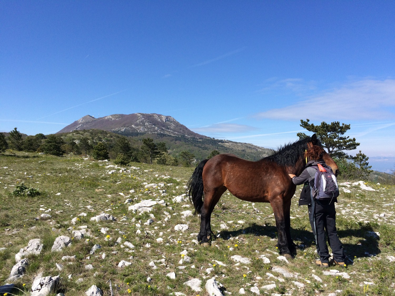 konji na učki
