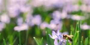 Kako nastaje med