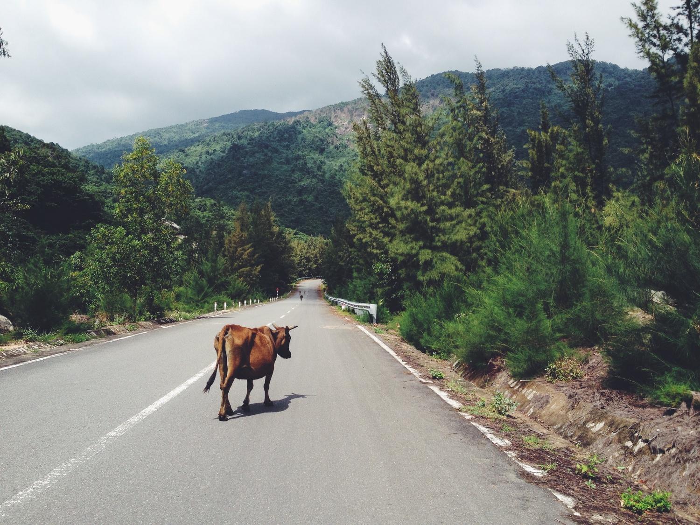 Životinje u prometu
