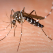 Komarci i zaštita od komaraca