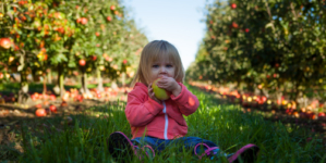 Jabuke i pesticidi