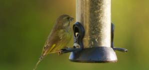 Prehrana ptica preko zime