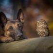 Prijateljstvo psa i sivog ćuka