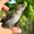 Vrabac Hrvoje