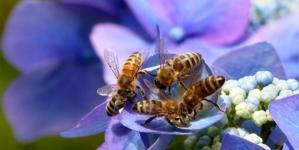 Kako bi izgledao svijet bez pčela?