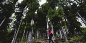Kako se ponašati u šumi