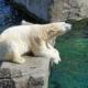 Polarni medvjed Inuka, rob civilizacije