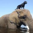 Životinjska prijateljstva