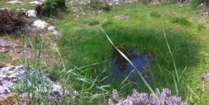 KAL – udruga za zaštitu i obnovu vodenih staništa u Istarskoj županiji