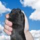 Zakon o zaštiti životinja – Iskoristite ga