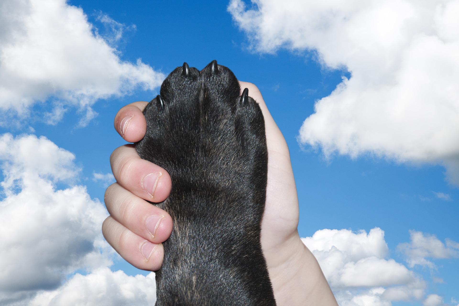 zakon o zaštiti životinja