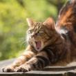 Mačke i što znamo o njima
