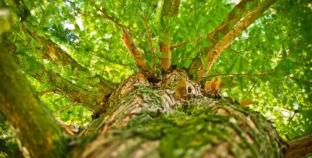 Norveška spašava svjetske šume