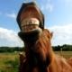 Znaju li se životinje smijati?