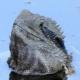 Australski vodeni zmaj