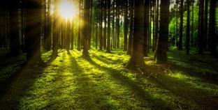Mudro o drveću