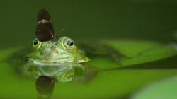 Priroda i poznati ljudi