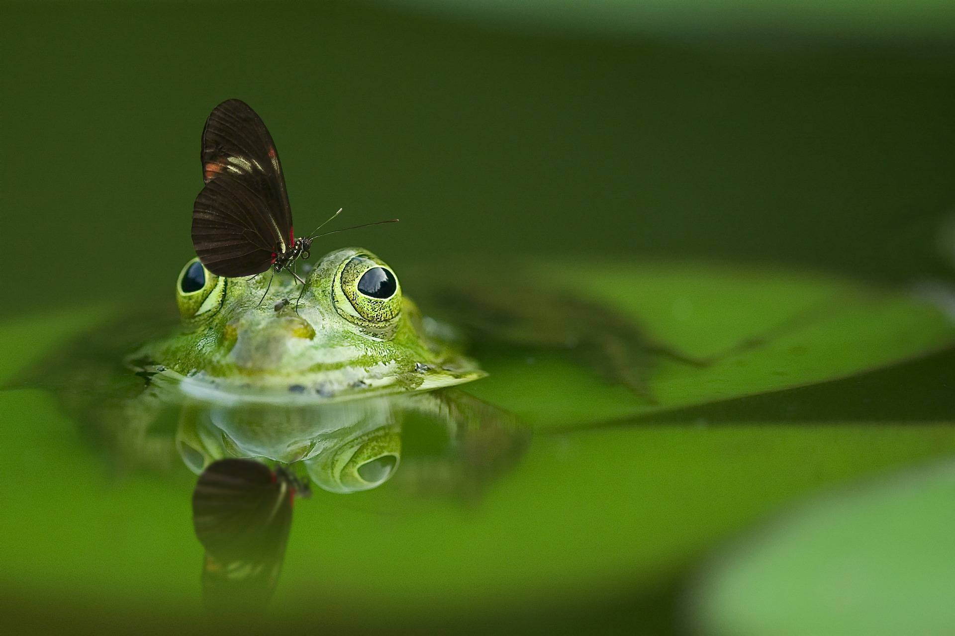 žaba, leptir i priroda