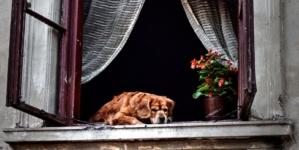 Sedam stvari koje vam želi kazati vaš stari pas