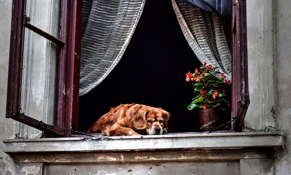 stari pas
