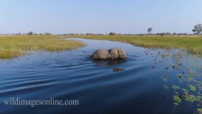 Afrika viđena okom drona