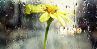 Kiša ili dažd