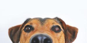 Zašto psi žive kraće nego ljudi?