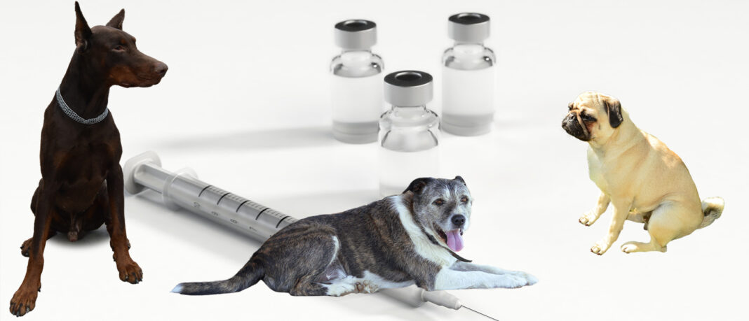 Cijepljenje pasa protiv bjesnoće